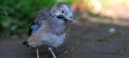 Fundvogel – was tun?